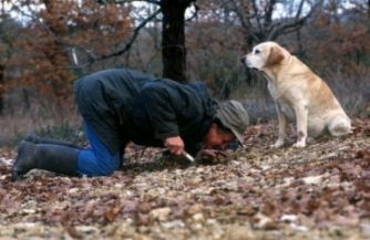 Sniffing truffles_man_and_dog